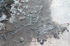 грибки по бетону